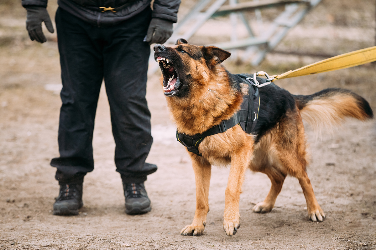 Animal Control Officers